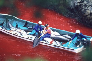 dolphin slaughter taiji japan