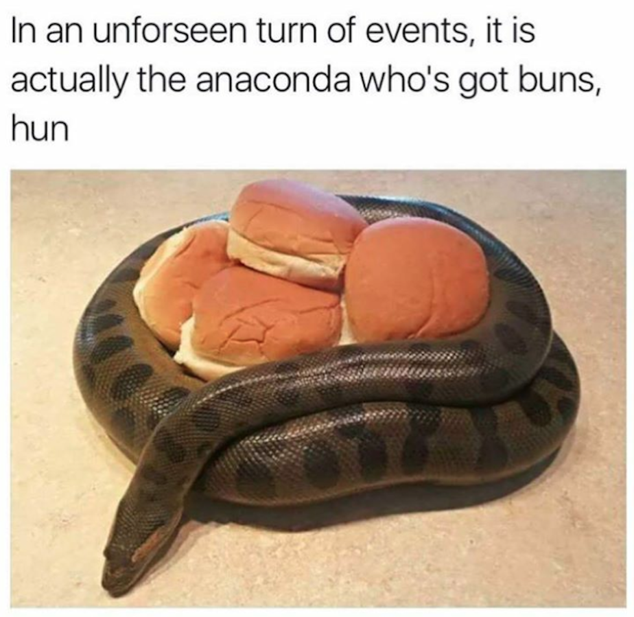 28-anaconda-got-buns